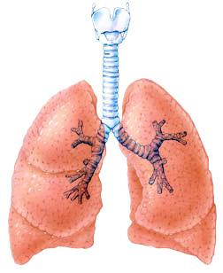 Почему отекают лёгкие